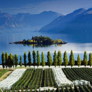Central Otago Wine Tour