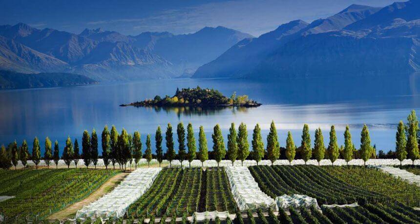 Central Otago Wine Tour